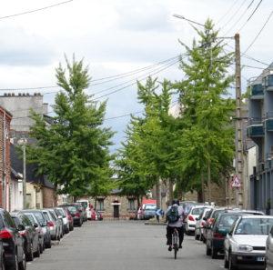 arbres et contraintes urbaines