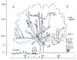 schéma expertise de l'arbre - source : Thomas Schmutz