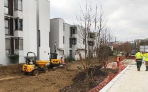 arbres et espaces verts : projet de plantation