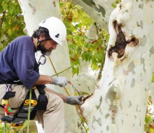 expert arbre et grimper