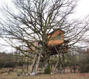 arbre support - habitat alternatif