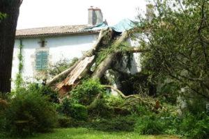 dommages liés aux arbres